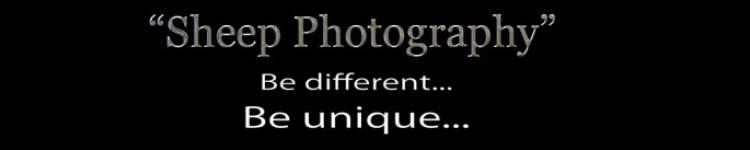 Portfolio van Sheep Photography